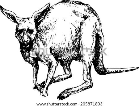 hand drawn kangaroo - stock photo
