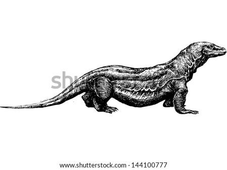 hand drawn komodo dragon - stock photo