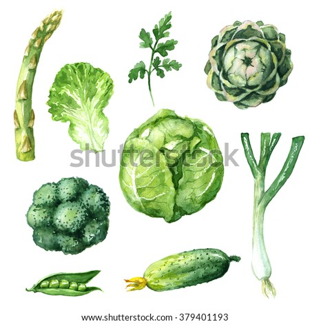 Hand drawn watercolor illustration. Set of organic products. Sketch of green vegetables isolated on white. - stock photo