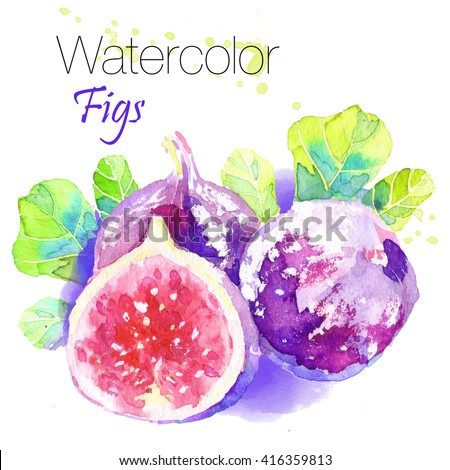 Hand drawn watercolor painting fruit fig on white background.Ripe,delicious, exotic Figs closeup on white background.Colorful bright isolated Illustration For Food Design - stock photo