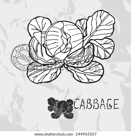 Hand drawn whole and sliced cabbage with leaves, design elements. Vegetable. Can be used for cards, invitations, gift wrap, print, scrapbooking. Kitchen theme - stock photo