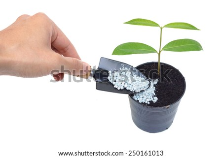 hand giving fertilizer to a young tree growing in a black plastic pot with isolated background - stock photo