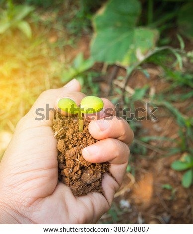 Hand holding a fresh young plant. Symbol of new life and environmental conservation. - stock photo