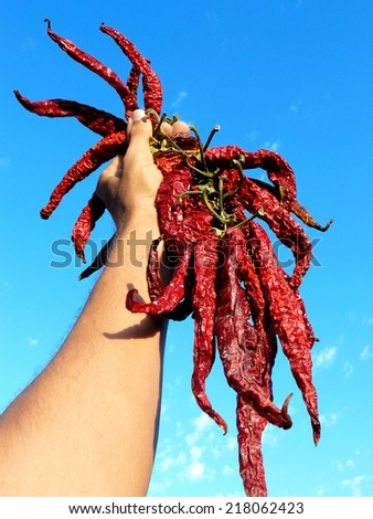 hand holding bunch of dry hot chili peppers - stock photo