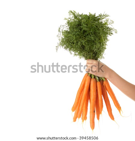 Hand holding bunch of orange carrots with green tops against white background. - stock photo