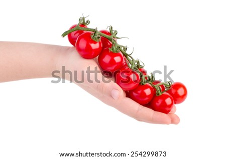 Hand holding cherry tomatoes branch isolated on white background - stock photo