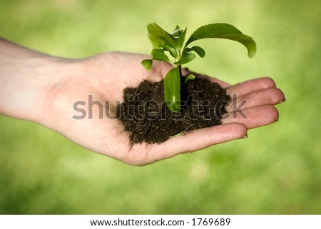 Hand holding dirt and plant - stock photo