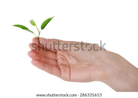 Hand holding fresh green sprout isolated on white - stock photo