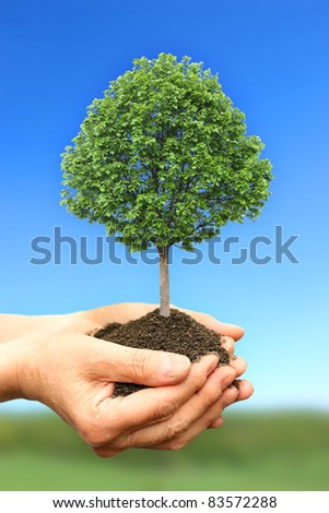 Hand holding green tree in nature - stock photo