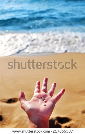 hand holding little shells - stock photo