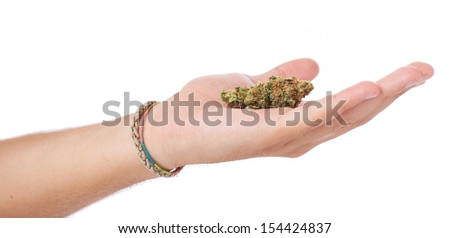 hand holding marijuana isolated on a white background - stock photo