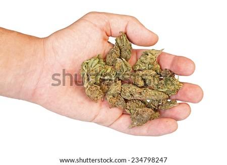 Hand holding marijuana isolated on a white background - stock photo
