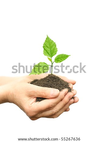 Hand holding plant - stock photo