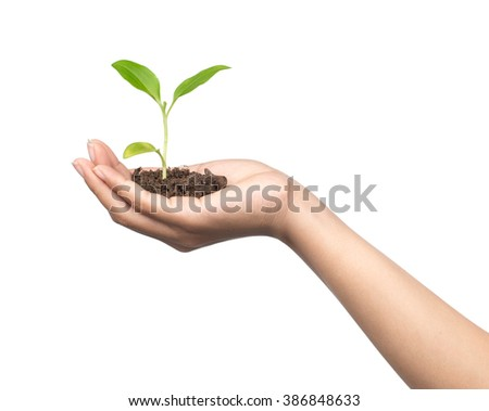 Hand holding sapling in soil isolated on white background - stock photo