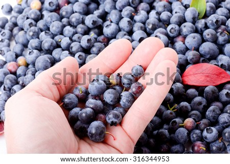 Hand holding some healthy blueberries a superfood antioxidant - stock photo