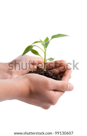 Hand holding sprout in the studio - stock photo