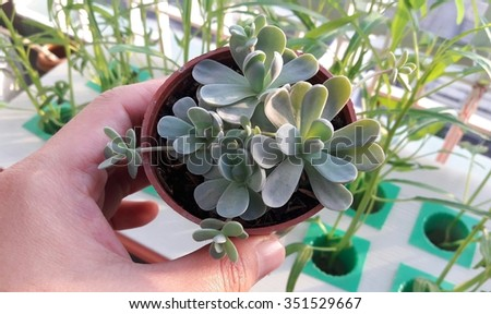 Hand Holding Succulent Plant in Sunshine Day - stock photo