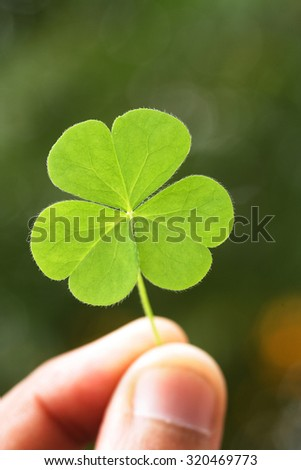 Hand holding three leaf clover - stock photo