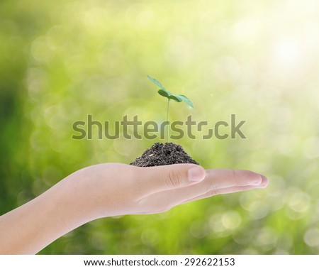 Hand holding tree , plant concept - stock photo