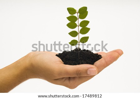 Hand holding young plant against white background - stock photo