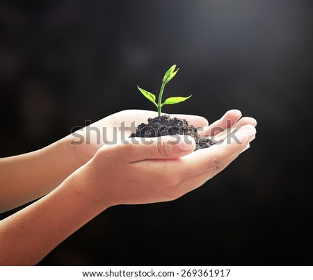 Hand holding young Tree. Medical Idea Seed Child CSR Family Fresh Give Grace Honor Honour New Begin Plant Life Soil Sprout Trust Earth Hour Food Ecology Dark Bio Save Think Plant Black Grow Nature. - stock photo
