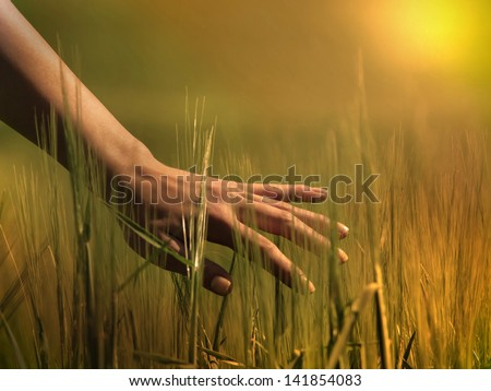 Hand in a field - stock photo