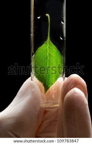 Hand in glove holding test tube with plant - stock photo