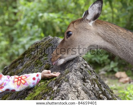 Hand of a child by giving food to a deer. - stock photo