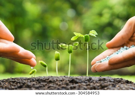 hand of a farmer watering and giving fertilizer to young green plants / nurturing baby plant with chemical fertilizer - stock photo