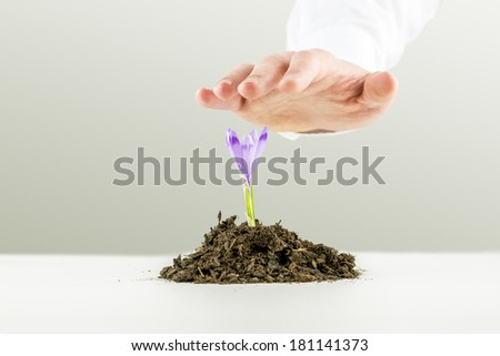 Hand of a man nurturing a fresh purple freesia flower growing in a pile of rich organic earth on a white surface as he protects it from above in a conceptual image of saving the planet and ecology. - stock photo