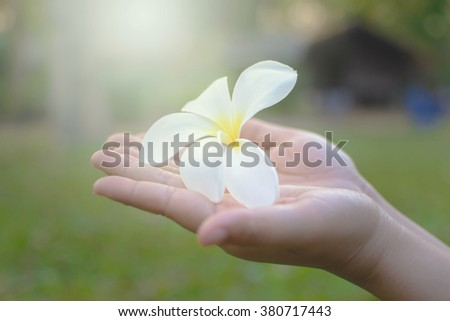 Hand of a young woman holding flower. - stock photo