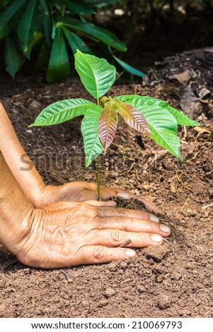 hand of farmers planting a tree seedling - stock photo