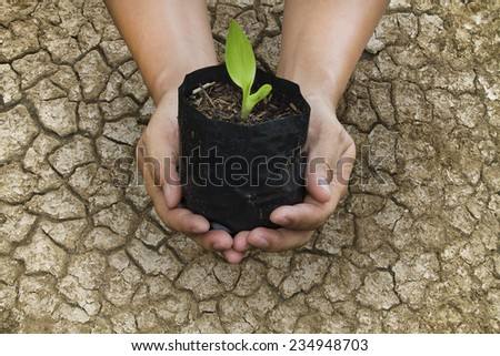 Hand of people to plant seedlings on the drought ground - stock photo
