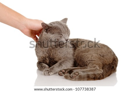 Hand of person stroking head of cute cat. isolated on white background - stock photo