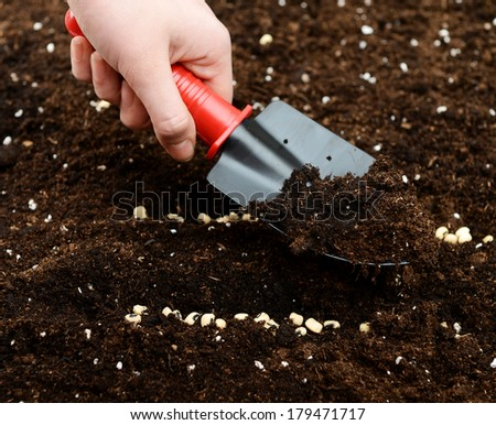 hand planting seeds in the ground - stock photo