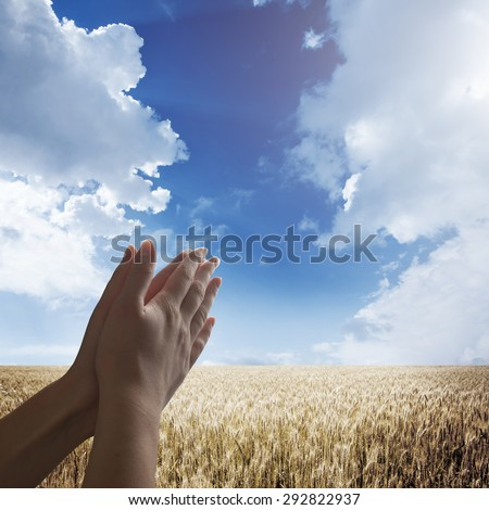 Hand reaching for the sky with wheat field on the background - stock photo