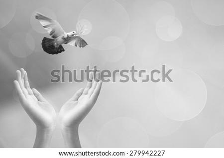 Hand releasing a bird into the air , concept design - stock photo