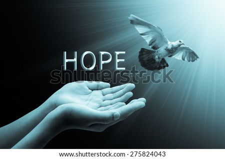 Hand releasing a bird into the air concept hope, peace and spirituality - stock photo