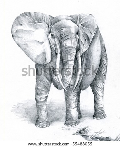 Hand sketch of an African Elephant - stock photo