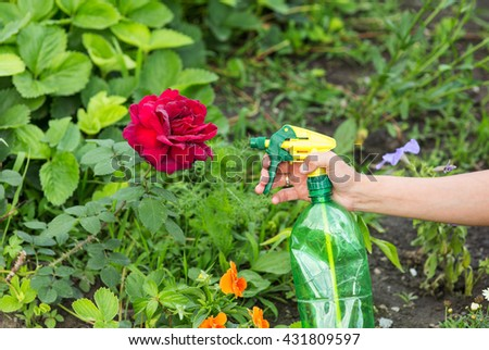 Hand squirting a solution of rose aphid in garden - stock photo
