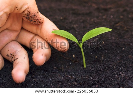hand tenderly touching a young green plant / growing tree / save the environment  - stock photo