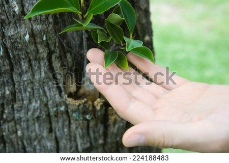 Hand touching leaves growing on tree trunk, cropped view - stock photo