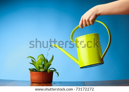 hand watering a plant with watering can - stock photo