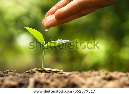 hand watering a young green plant growing on pile of golden coins with natural green background / Green business concept - stock photo