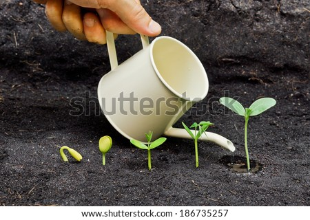 hand watering plants growing in sequence of seed germination on soil, evolution concept - stock photo
