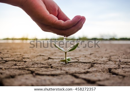 Hand watering the ground and tree barren. Trees small growing nature. - stock photo