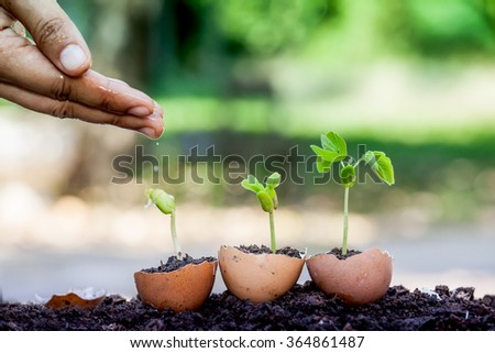 hand watering young plant growing in egg shell in garden - stock photo