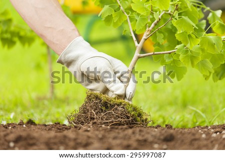Hand with glove Planting Small Tree with roots in a garden on green background - stock photo