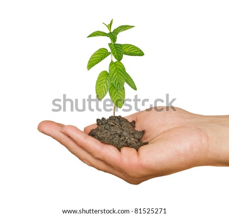 Hand with mint - stock photo