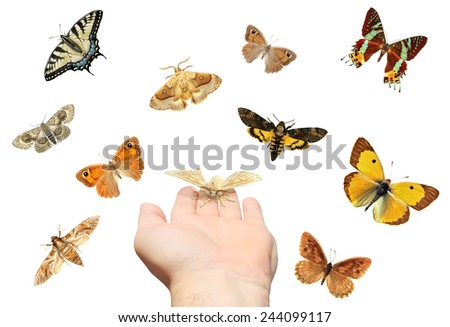 Hand with open palm and butterflies isolated on the white background  - stock photo